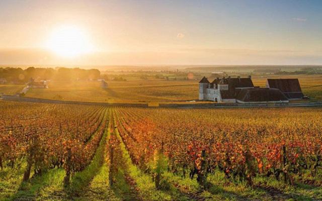 Les 5 plus beaux vignobles du monde !